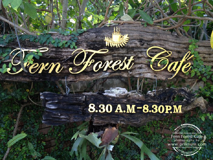 fern-forest-cafe11