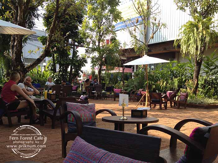 new-fern-forest-cafe-02