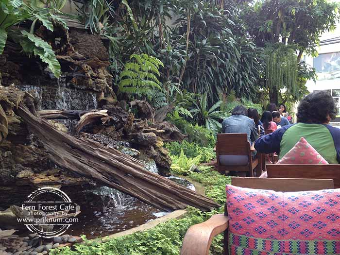 new-fern-forest-cafe-05