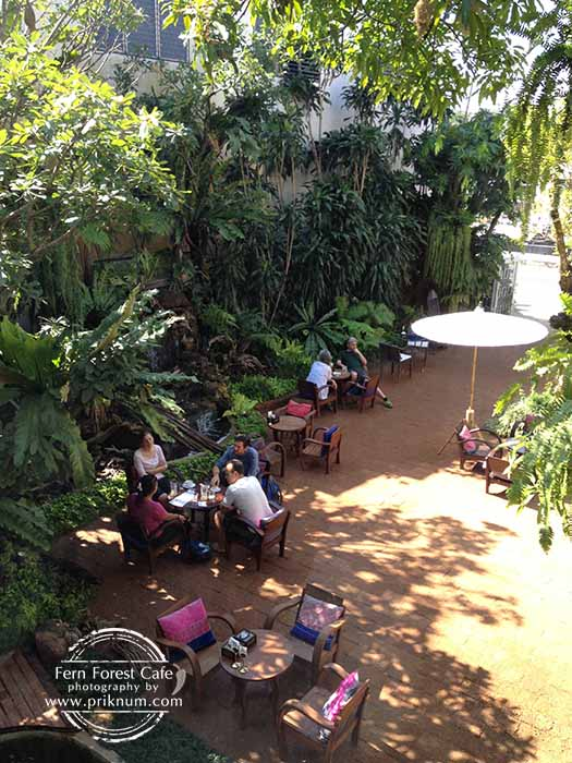 new-fern-forest-cafe-10